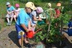 Всероссийский смотр-конкурс дошкольных учреждений на лучшую постановку экологического воспитания